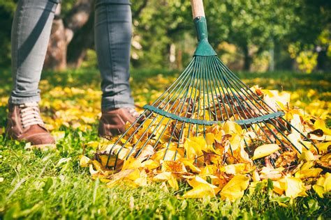 Do You Really Need To Rake Up Leaves?   Chatelaine