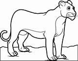Lion Coloring Pages Female Lioness Drawing Children Mountain Printable Animal Sheets Male Getdrawings Head Supplyme Letscolorit 545px 28kb sketch template