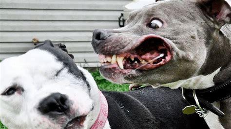 dangerous dogs   world fact