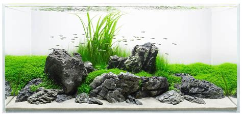 Simple Aquascaping Ideas by Lovely Ground Cover Planted Around Stunning Stones Simple