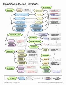 175 Best Images About Nclex Study Guide On Pinterest