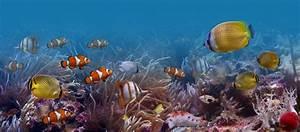 Foto mural Fondo Del Mar Peces animales