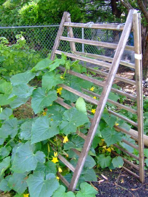A Frame Garden Trellis by The Circle Gardener Vertical Gardening Trellis