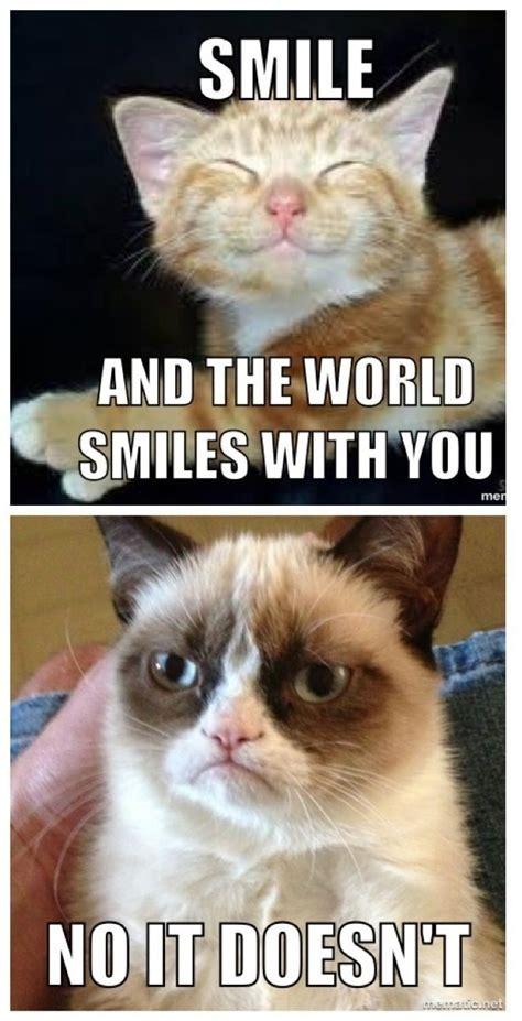 The Grumpy Cat Meme - 1379 best grumpy cat images on pinterest grumpy cat funny images and funny pics