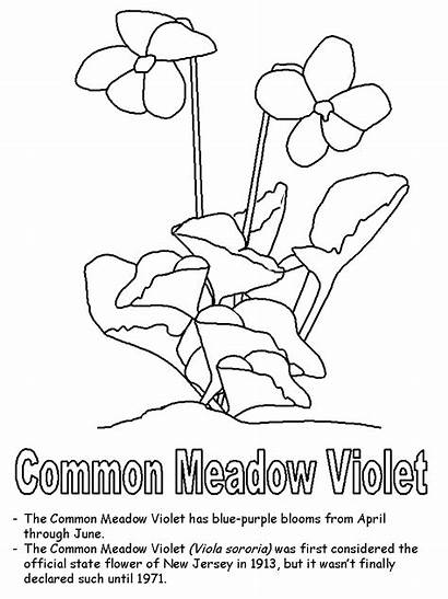 Coloring Violet Flower Purple Pages Jersey Wisconsin