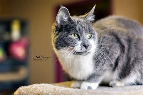 Last Chance Cat Ranch  Lethbridge Pet Photography Blog