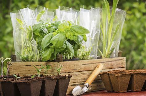 Windowsill Herb Garden by Grow A Windowsill Herb Garden