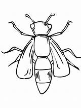 Coloring Insect Fly Giant Sheet Sky sketch template