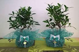 Scopri le offerte e compra da uno dei nostri negozi partner! Bomboniere Bonsai   Bomboniere Per Matrimonio   Matrimonio