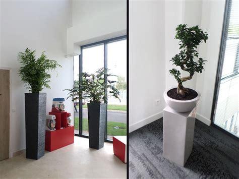 plante de bureau aménagement végétal d un showroom et bureau à fleury mérogis