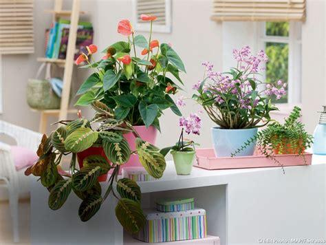 plante interieur mi ombre trouvez la plante d int 201 rieur qu il vous faut par