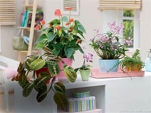 Plante D Intérieur : trouvez la plante d 39 int rieur qu 39 il vous faut d tente jardin ~ Dode.kayakingforconservation.com Idées de Décoration