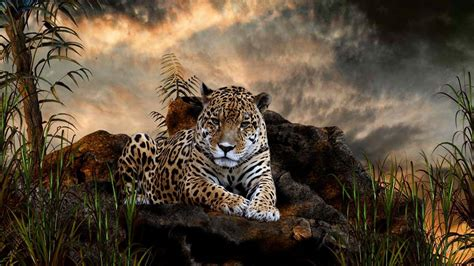 Jaguar Wallpapers FREE Pictures on GreePX