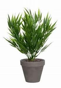 Künstliche Pflanzen Wie Echt : kunstpflanzen k nstliche zimmerpflanzen ~ Michelbontemps.com Haus und Dekorationen