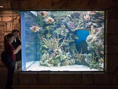 lionfish tank care vegas las should why they mandalay bay source