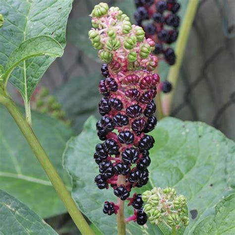 Pflanzen Bestimmen Im Garten by Pflanzen Mit Stacheln Giftig Dornig Stachelig Pflanzen Im