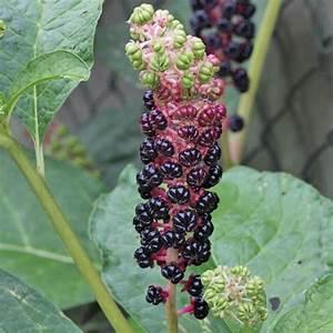Pflanze Mit Stacheln : pflanzenbestimmung ~ Frokenaadalensverden.com Haus und Dekorationen