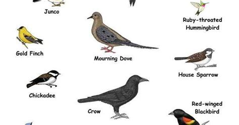 names of small birds you can see these birds in your