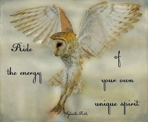 owl eyes quotes quotesgram