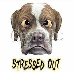 Dogs and holiday stress | The Pet Product Guru