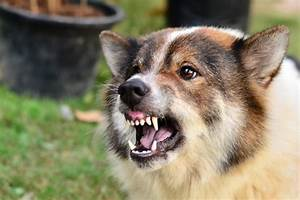 Why Your Pet Needs a Rabies Vaccine - The Pet Resort