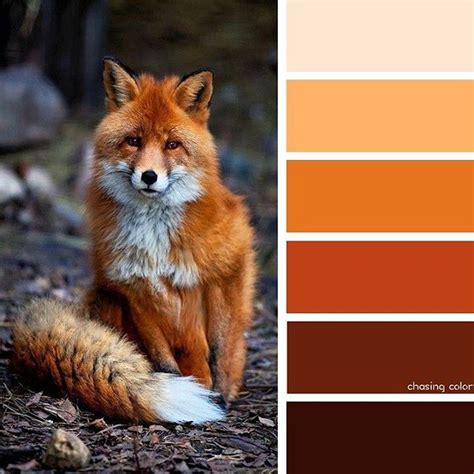 fox colors shades of a fox photo credit blazepress