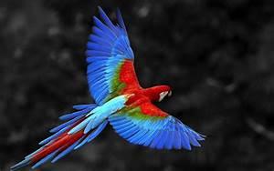 4K The Flight of a Bird Wallpapers High Quality | Download Free  Bird
