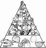 Pyramid Coloring Food Pages Healthy Nutrition Printable Clipart Groups Basic Colouring Foods Children Cooking Tips Sheets Coloringhome Lunchbox Teaching Popular sketch template