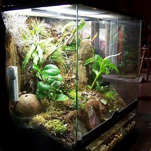 Tiere Für Aquarium : terrarium aquarium selber bauen deine projektbox inkl ~ Lizthompson.info Haus und Dekorationen