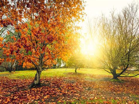 Garten Im Herbst Was Tun by Gartenpflanzen Herbst
