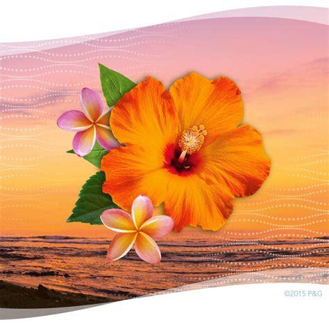 Amazon.com: Febreze Wax Melts Hawaiian Aloha Air Freshener