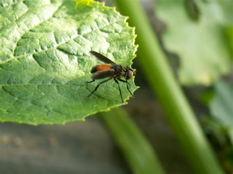 6 ways to get rid of squash bugs in your garden naturally