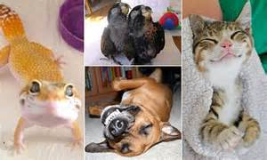 pictures show grinning animals including dogs cats birds