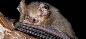 Melbourne's Microbats - Student Challenge