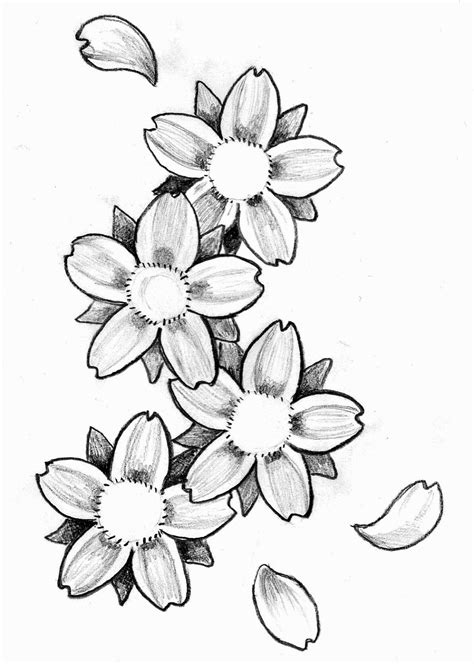 Cherry Blossom Drawing Outline at GetDrawings | Free download
