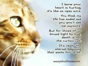 loss of a cat quotes 1000 images about cat lover quotes sayings on