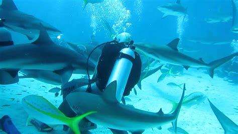 mergulho  tubaroes shark diving  nassau bahamas