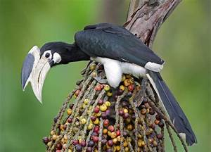 20 magnifiques oiseaux exotiques dont vous ignoriez ...