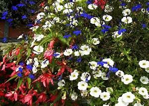 Blumenkübel Bepflanzen Sommer : balkonkasten bepflanzen beispiele 01 calibrachoa minipetunien zaubergl ckchen sommer sommerpflanzung ~ Eleganceandgraceweddings.com Haus und Dekorationen