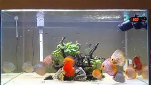Best Discus Aquarium - YouTube