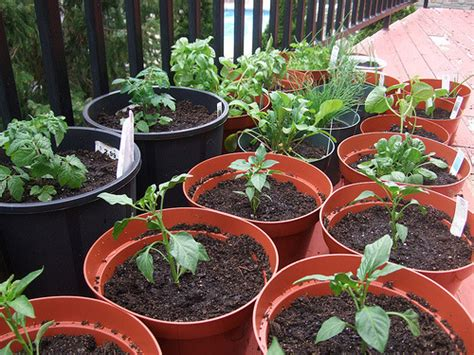 Easy Container Vegetable Gardening In 7 Simple Steps (part