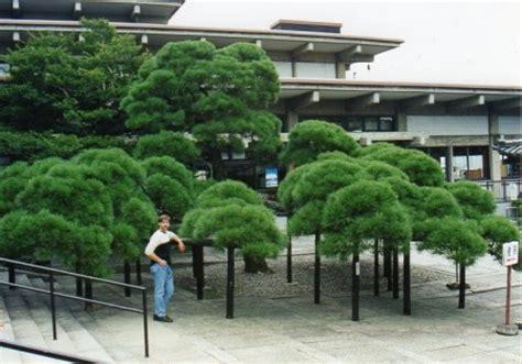 Bäume Für Japanischen Garten by Japanischer Garten Baumgestaltung In Japan