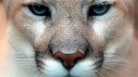 Live Animal Wallpaper For Mobile - stunning animals hd wallpapers hd wallpapers and images