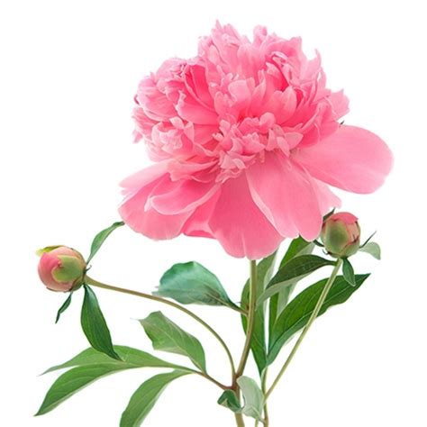 16 Romantic Flower Meanings - Symbolism of Different Kinds of Flowers - Woman's Day