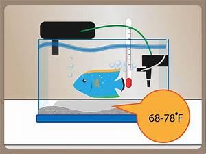 Optimale Aquarium Temperatur : aquarium water temperature for tropical fish aquarium design ideas ~ Yasmunasinghe.com Haus und Dekorationen