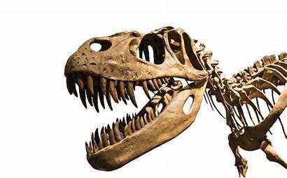 Rex Tyrannosaurus Teeth Jaw Smile Killer Muscles