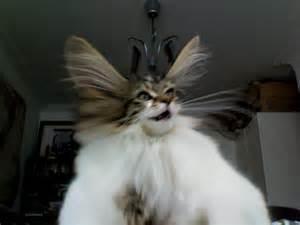dumb cat cat dumb with a of dumb cats