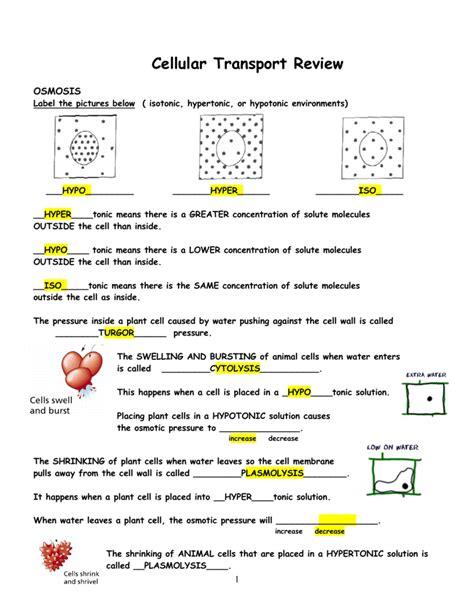 worksheets cellular transport worksheet answer key