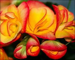 BeautyFul Flowers: 100 most beautiful flowers in the world ...