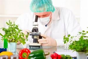 Alimentos transgénicos, qué son ¿Es una una alternativa ...